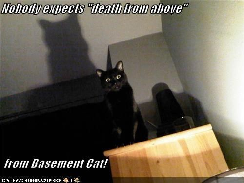 "ceiling cat mem | Nobody expects ""death from above"" from Basement Cat!"