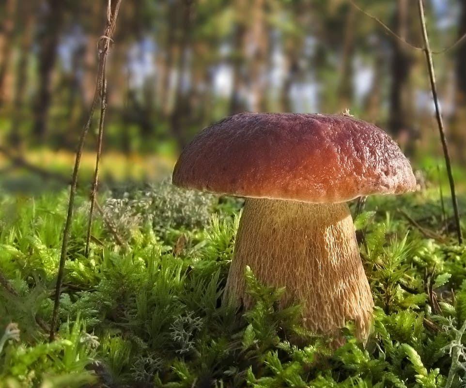 грибы в руках в лесу