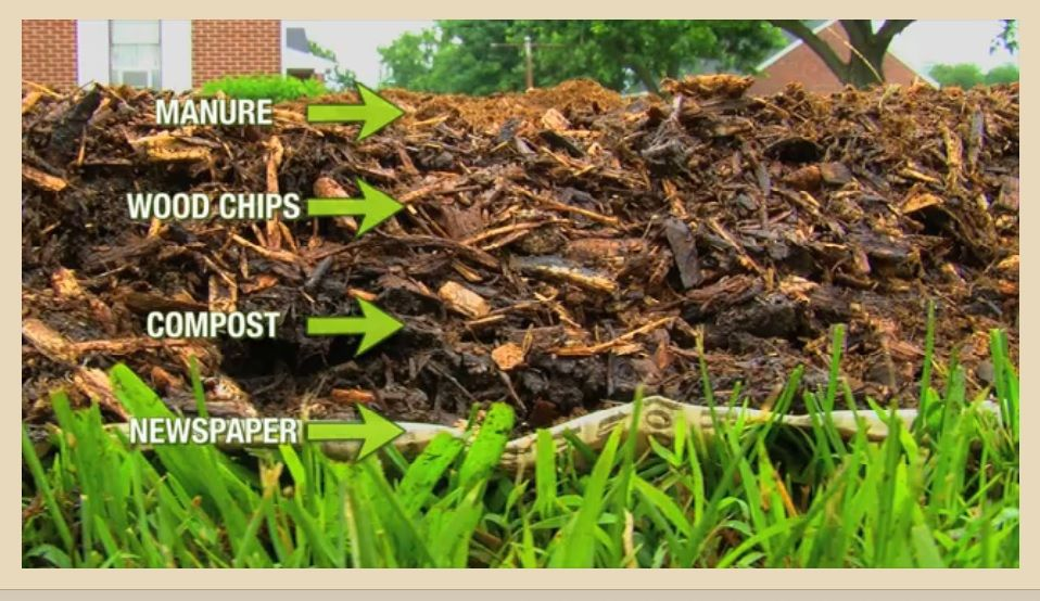 Using Wood Chip To Make Your Soil Fertile Organic Gardening