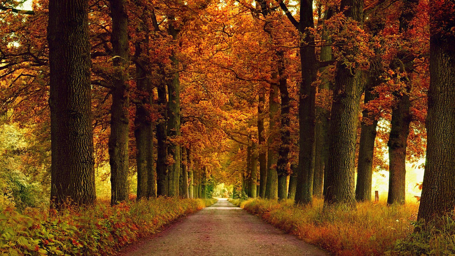 Картинки по запросу осень в парке | Пейзажи, Парк