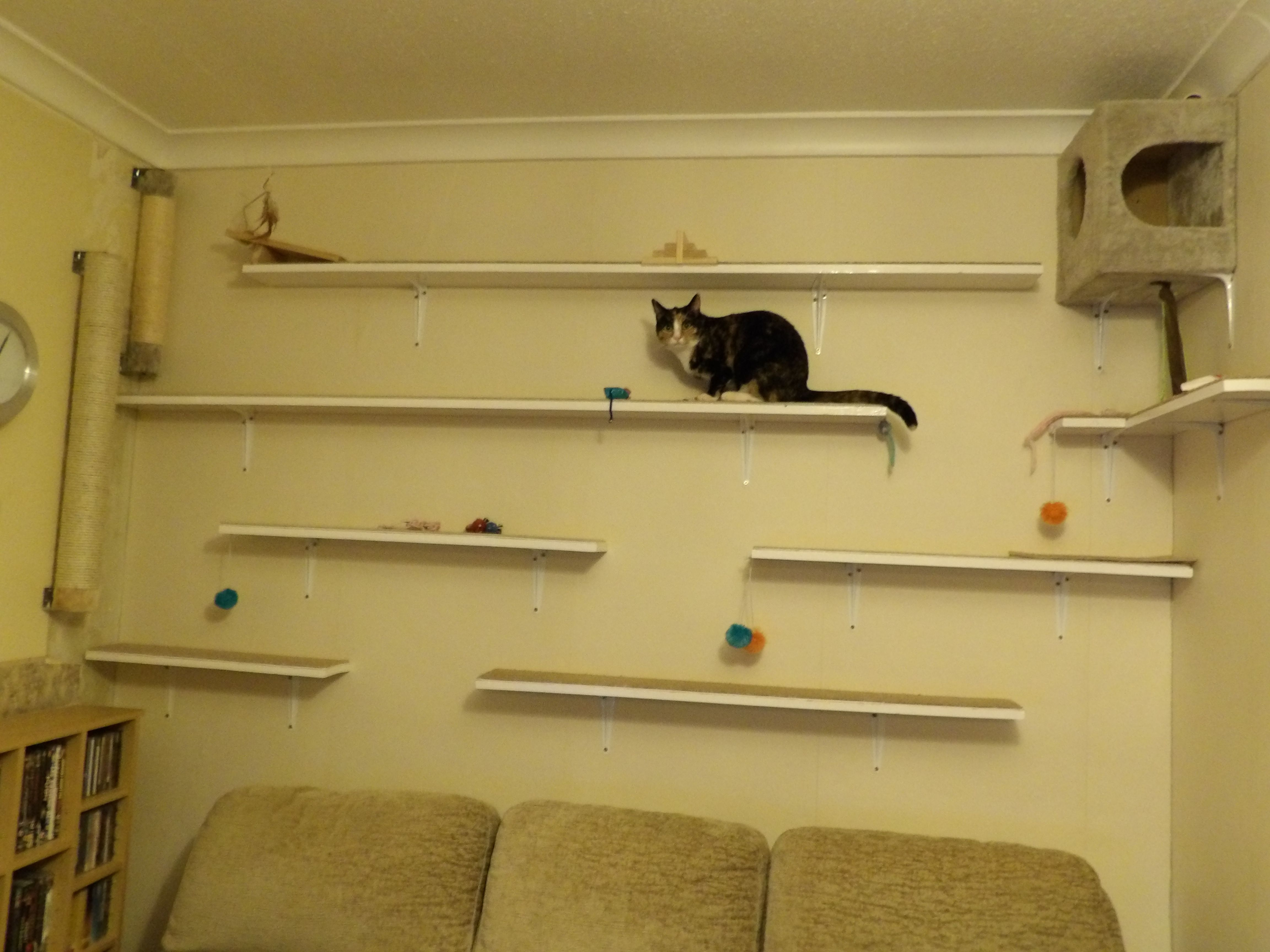Cat Wall  Shelves Made From Pack Of Five 240