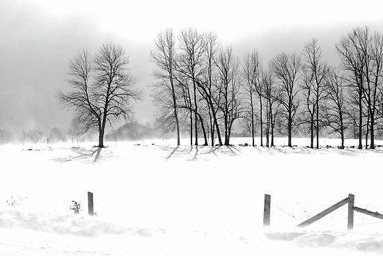 Ontario Brisk by Trevor  Capstick