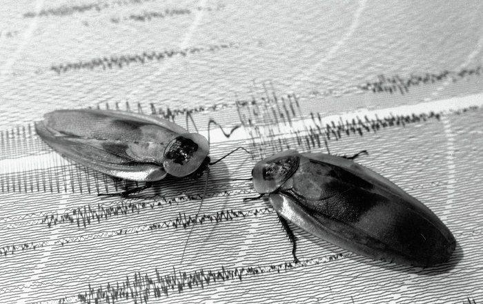 بتوقيت بيروت اخبار لبنان و العالم Eating Insects Punishment Strange