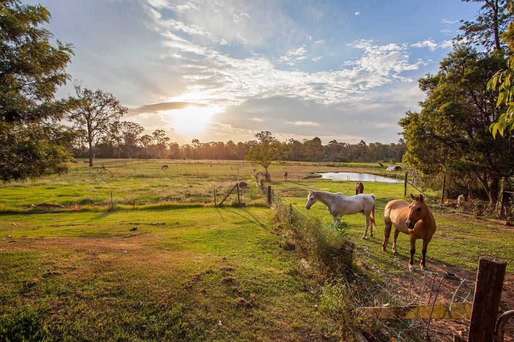 Horse Property for Sale in Logan County in Queensland. This property is amazing! Situated on 8 acres of beautiful rural land, you will live in peace and serenity with the Logan River being your rear boundary.