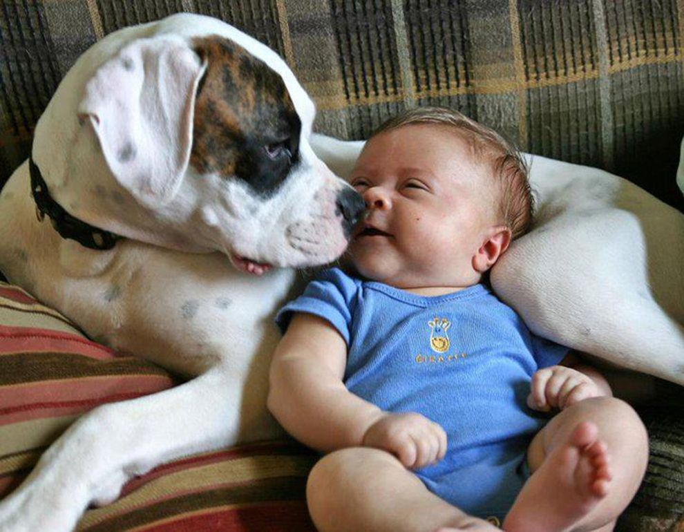 70ae49369 15 Dogs And Their Baby Best Buddies