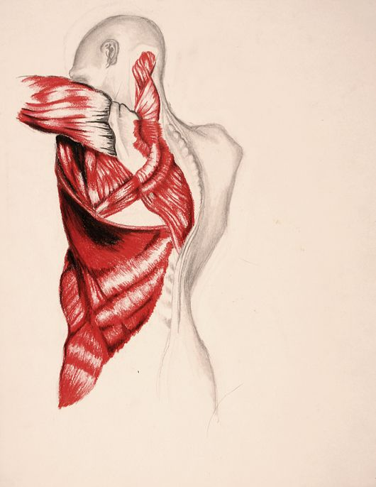 Anatomy Drawings Pinterest Anatomy And Drawings