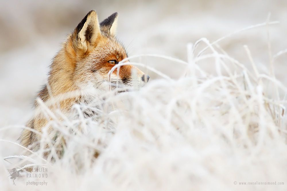 50 Shades of White and a Touch of Red by Roeselien Raimond on 500px