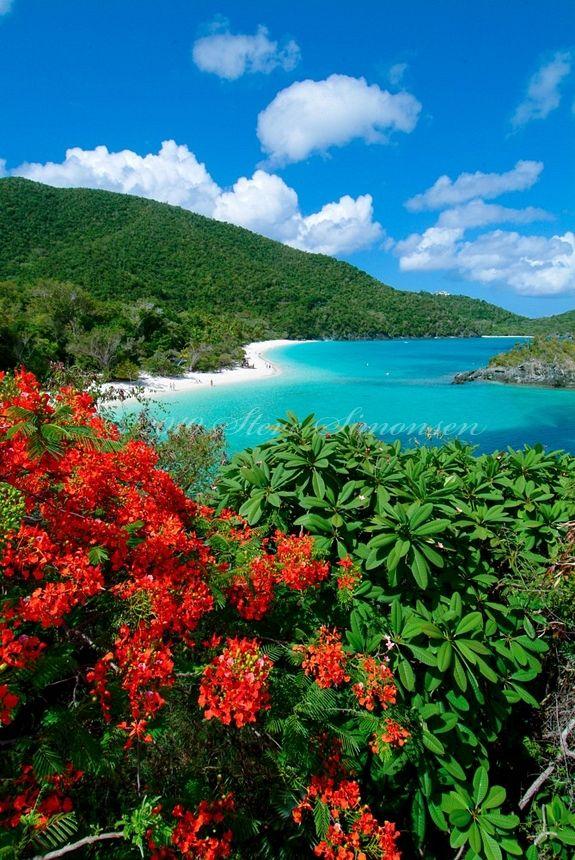 Trunk Bay Beach and flamboyants.Virgin Islands National Park.St. John, US Virgin Islands by Steve Simonsen