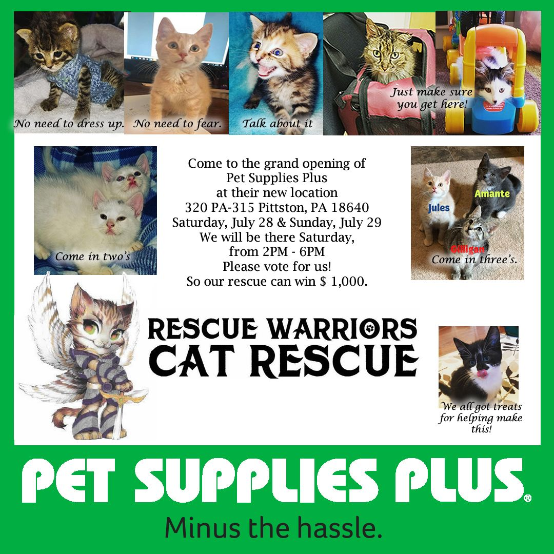 Pin By Rescue Warriors Cat Rescue On Pet Supplies Plus Opening Their New Store In Pittston Pet Supplies Plus Warrior Cat Cats And Kittens