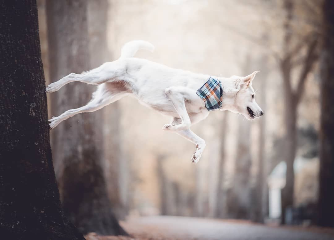 Picture Of A Dog Doing A Trick