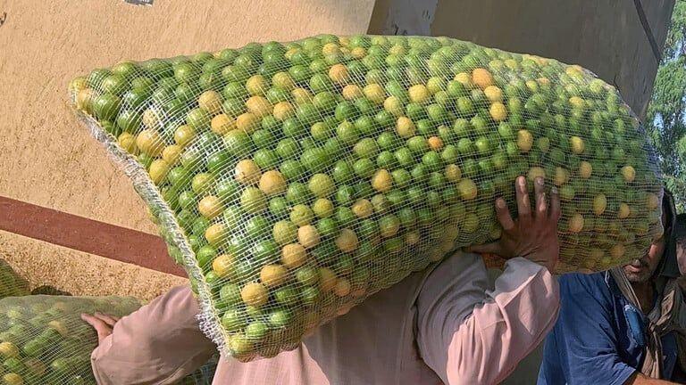 مصر نقيب الفلاحين يطالب بزيادة زراعة أشجار الليمون لتجنب حدوث أزمة كبيرة Lemon Tree Crochet Blanket Blanket