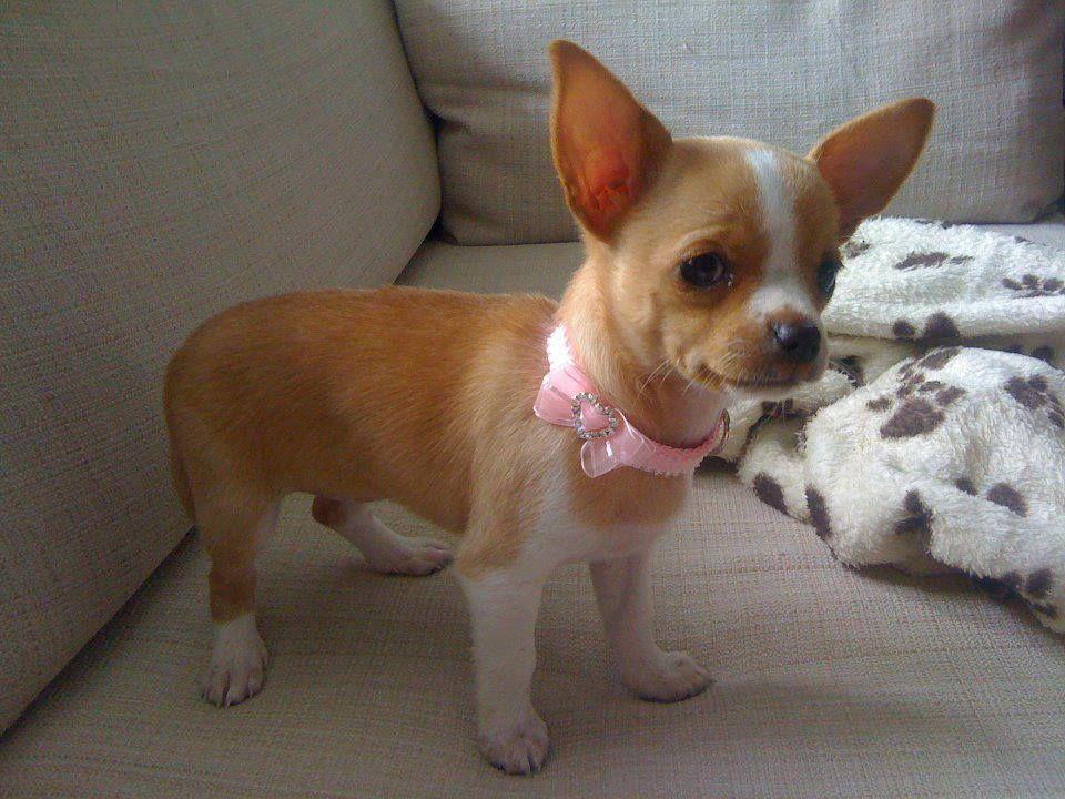 This little cutie's name is Tallielulah <3