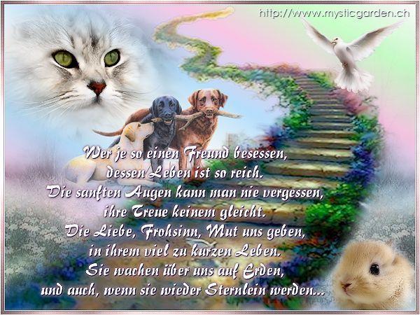 Www Hund Und Frei Beliebtezitate Www Hund Und Frei Regenbogenbrucken Hund Trauer Um Hund Regenbogenbrucke