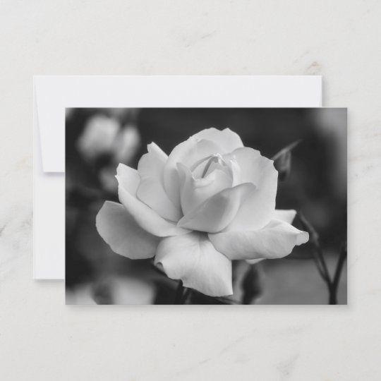 Tarjeta de felicitación de una rosa blanca en el jardín en blanco y negro