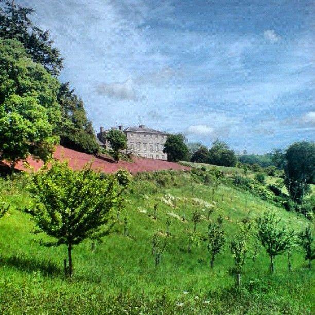 Sharpham Vineyard Near Totnes Devon Places To Visit When Staying At Grants Cottage