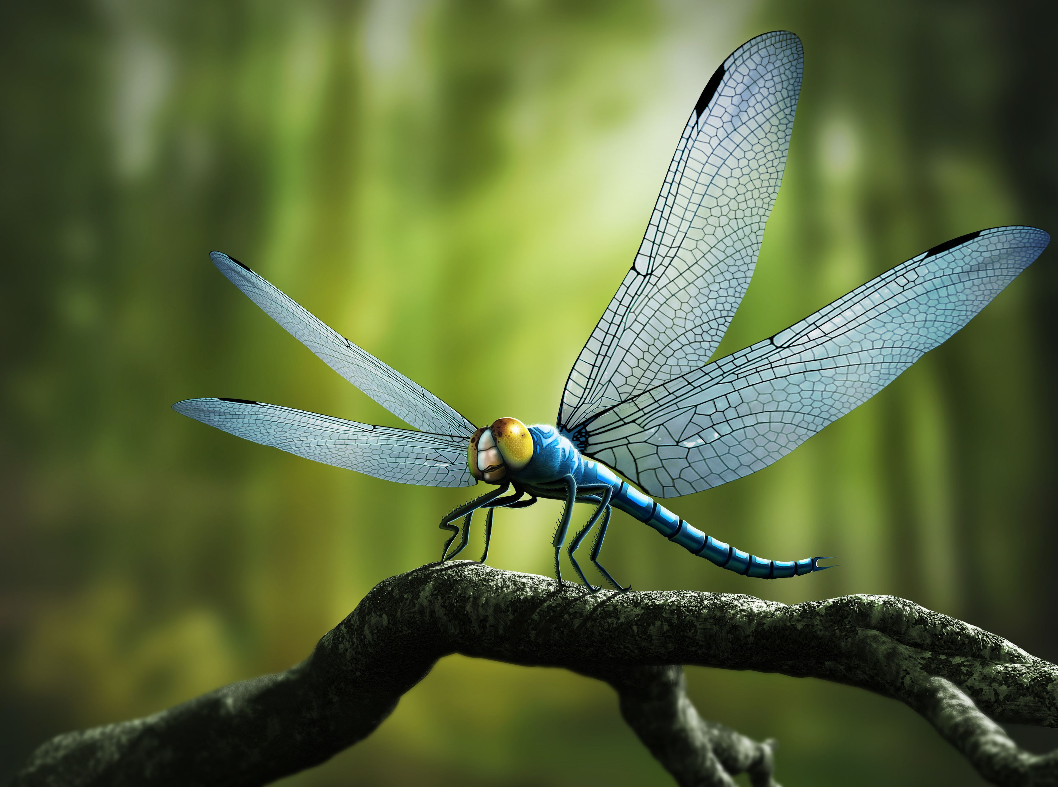 Why Were Prehistoric Insects So Big? Prehistoric insects
