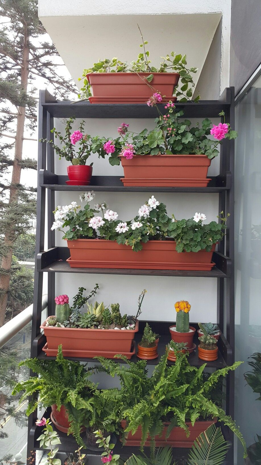 Repisa de plantas para balc n chico plantas pinterest for Plantas para balcones