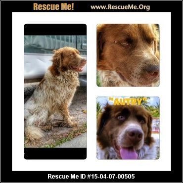 ― Florida Australian Cattle Dog Rescue ― ADOPTIONS ― RescueMe.Org