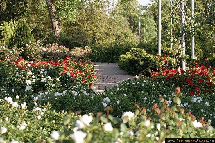 Wohl Rose Park Rose Park Garden Botanical Gardens