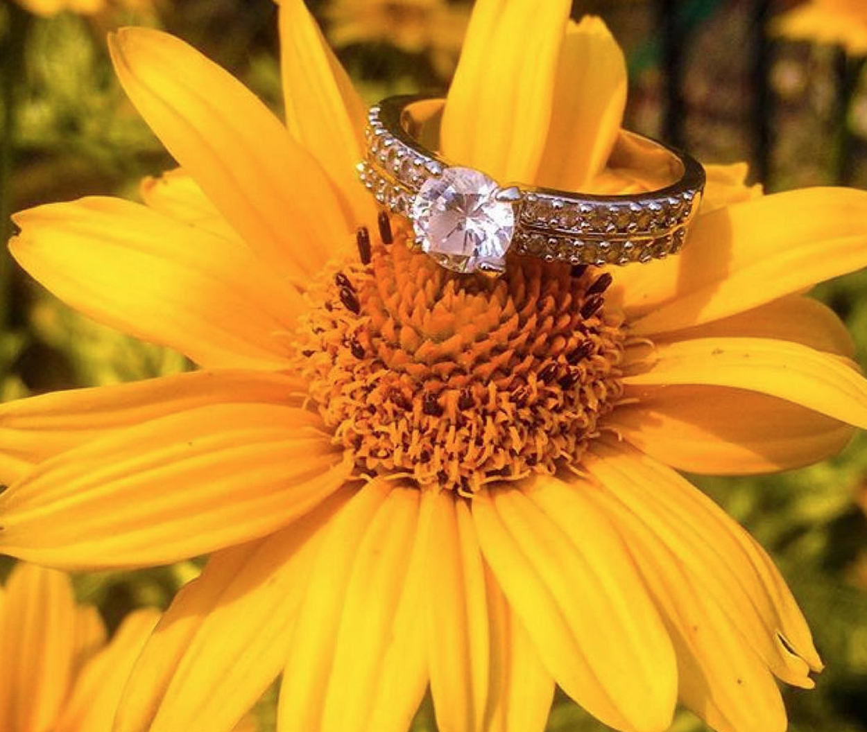 Gorgeous ring on top of a yellow sunflower seek your surprise at