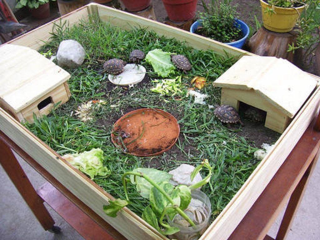 Alguien sabe de tortugas de tierra terrario tortugas y - Estanque para tortugas ...