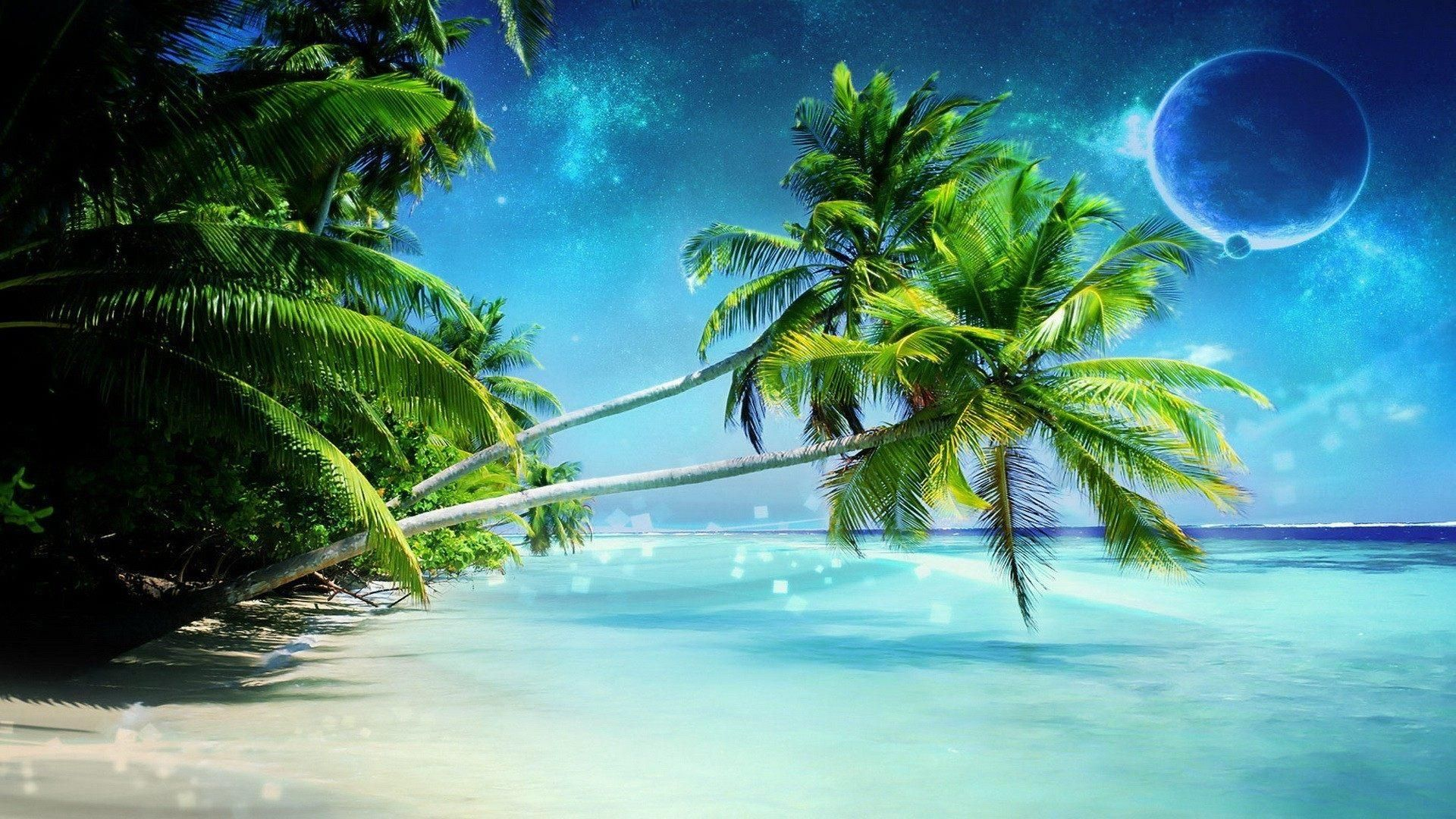 Palm Tree Wallpapers Wallpaper × Pictures Of Palm Trees