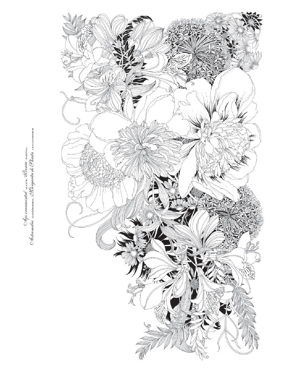 Floribunda. Flores para pintar / mtm editores | Pintar, Flor y Rosas