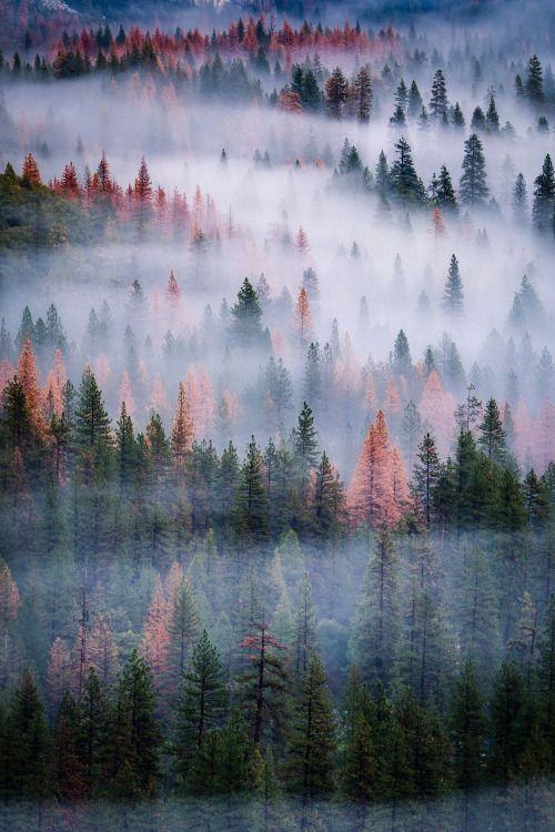 Desvre в 2020 г. | Живописные пейзажи, Фотографии природы ...