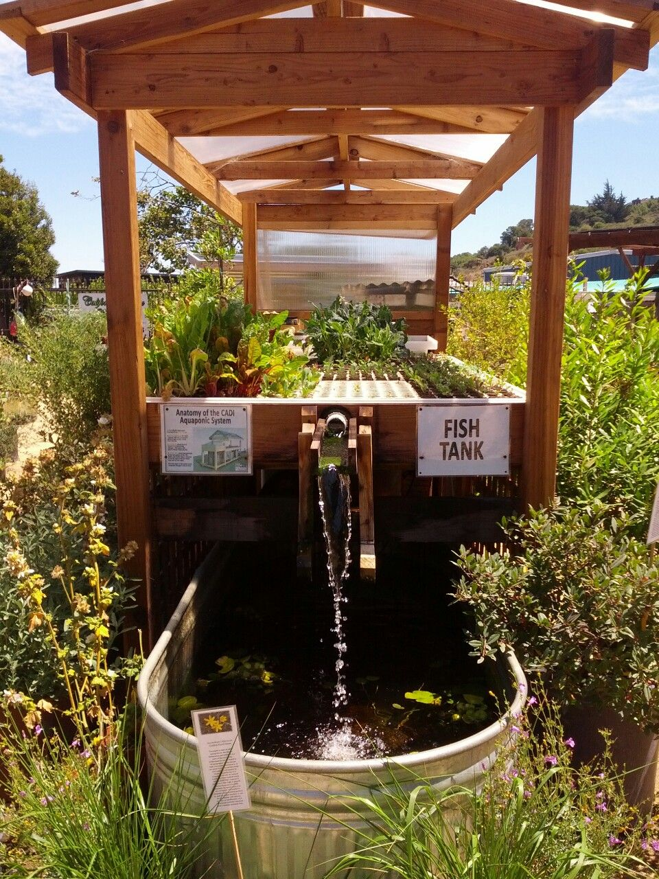 Check Out This Cool Aquaponics Set Up Doesn T Look Like 640 x 480