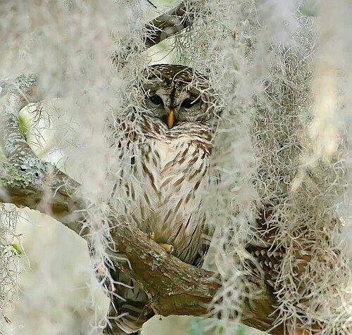 Pretty owl