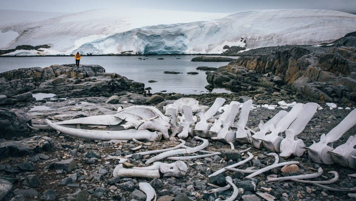 How to experience a taste of Antarctica without leaving