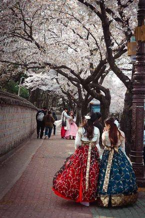 Gyeongju Cherry Blossom Festival South Korea Photography Gyeongju Hanbok Cherry blossom wallpaper in korea