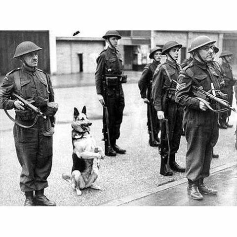 """world.war.2_ """"Ruff Ruff""""  British troops on parade... They're accompanied by a well trained German Shepherd standing at attention. What is also interesting about the photograph, the sergeants in the foreground are both armed with MkI STEN Guns."""