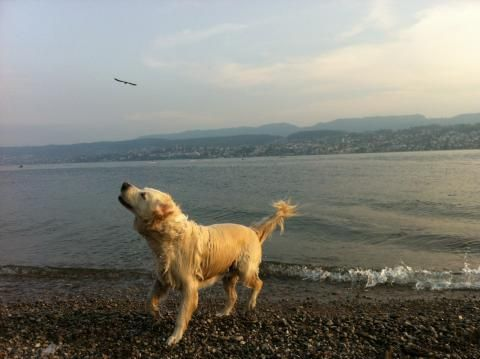 Zola In Zurich Pet Relocation Pets Customer Stories
