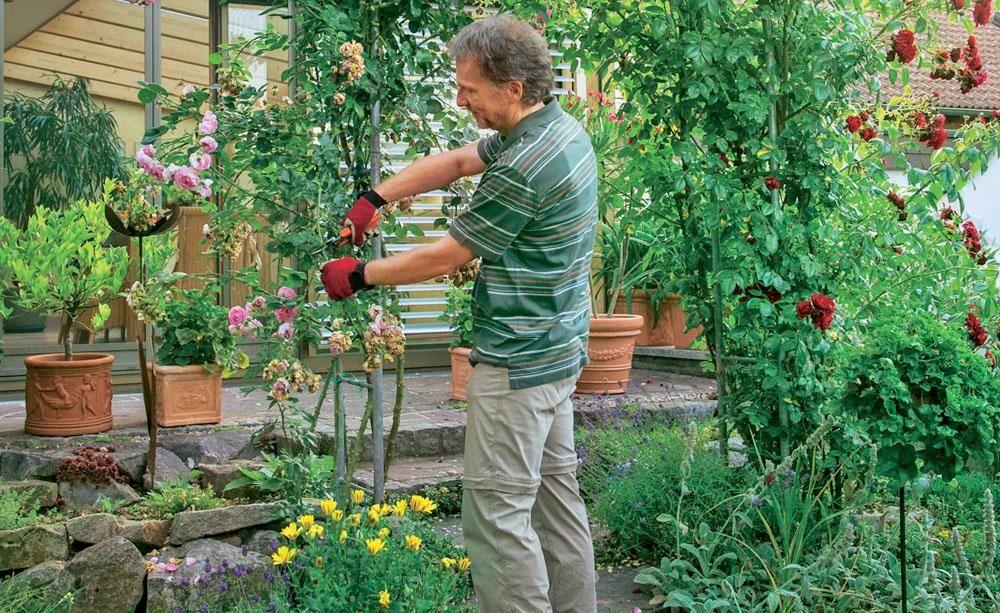 sommerschnitt f r kletterrosen pflanzen in haus und garten garten rosen und kletterrosen. Black Bedroom Furniture Sets. Home Design Ideas