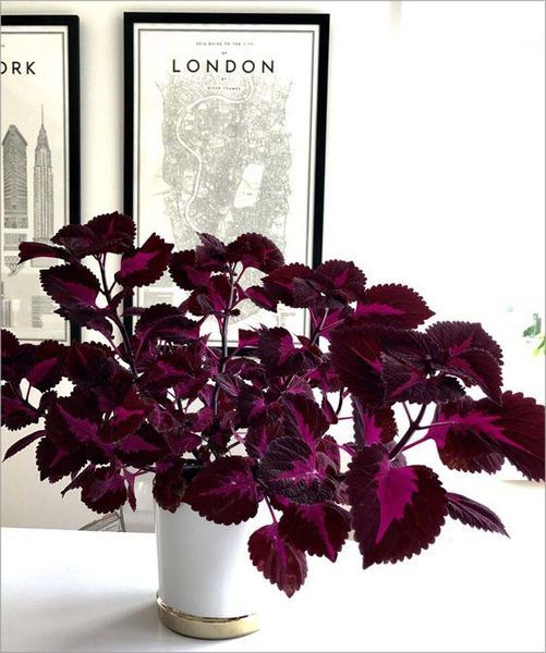 grande tendance 2018 les plantes motifs mix home. Black Bedroom Furniture Sets. Home Design Ideas
