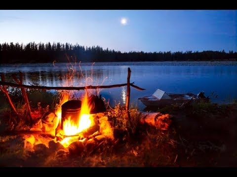 Forest night sounds, forest sounds, Relaxing river sounds ...