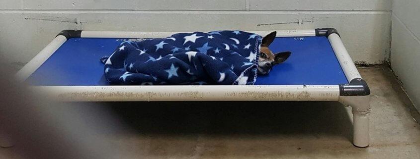 Homeless Senior Dog Tucks Himself In At Night At Shelter After His Owner Died Senior Dog Animal Shelter Animal Rescue