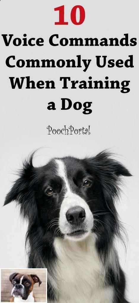 1 Basic Dog Training Fun And Simple Obedience Ideas 4343888986