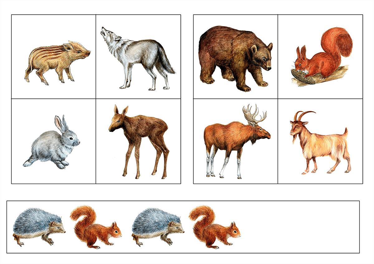 Картинка четвертый лишний дикие животные