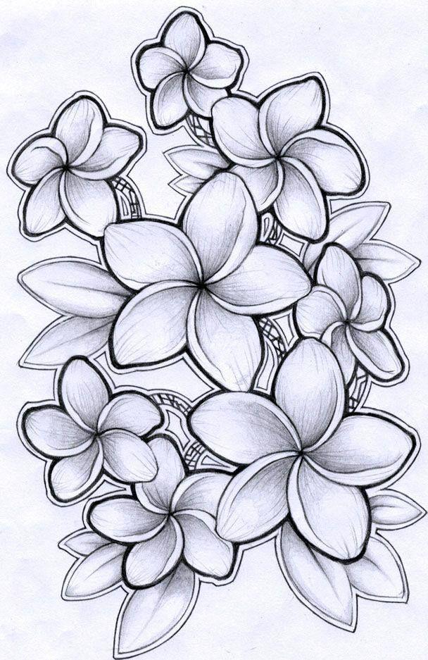 épinglé Par Nikol Kolka Sur Pretty Fleurs Hawaienne Dessin