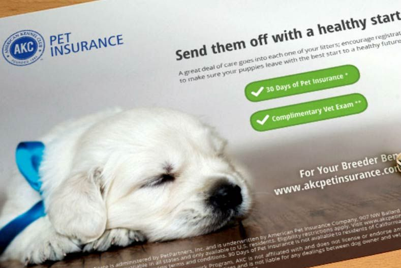 Do You Need Pet Insurance For Your Dog Puppy Insurance Pet