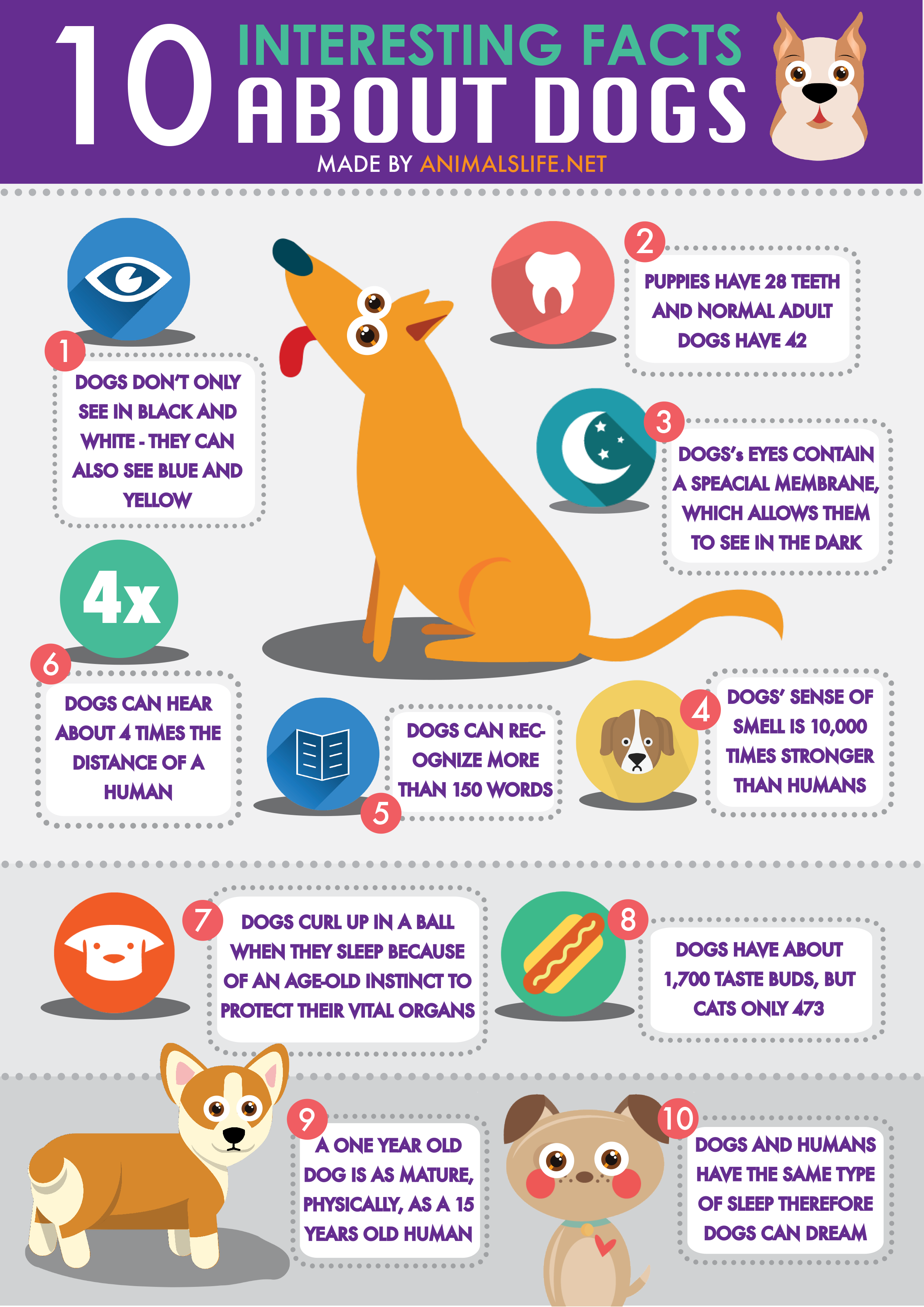 Pin by anna on interesting Dog facts, My pet dog, Dogs