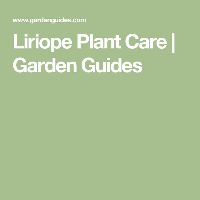 Liriope Plant Care Garden Guides Bridgeport Plants Trees