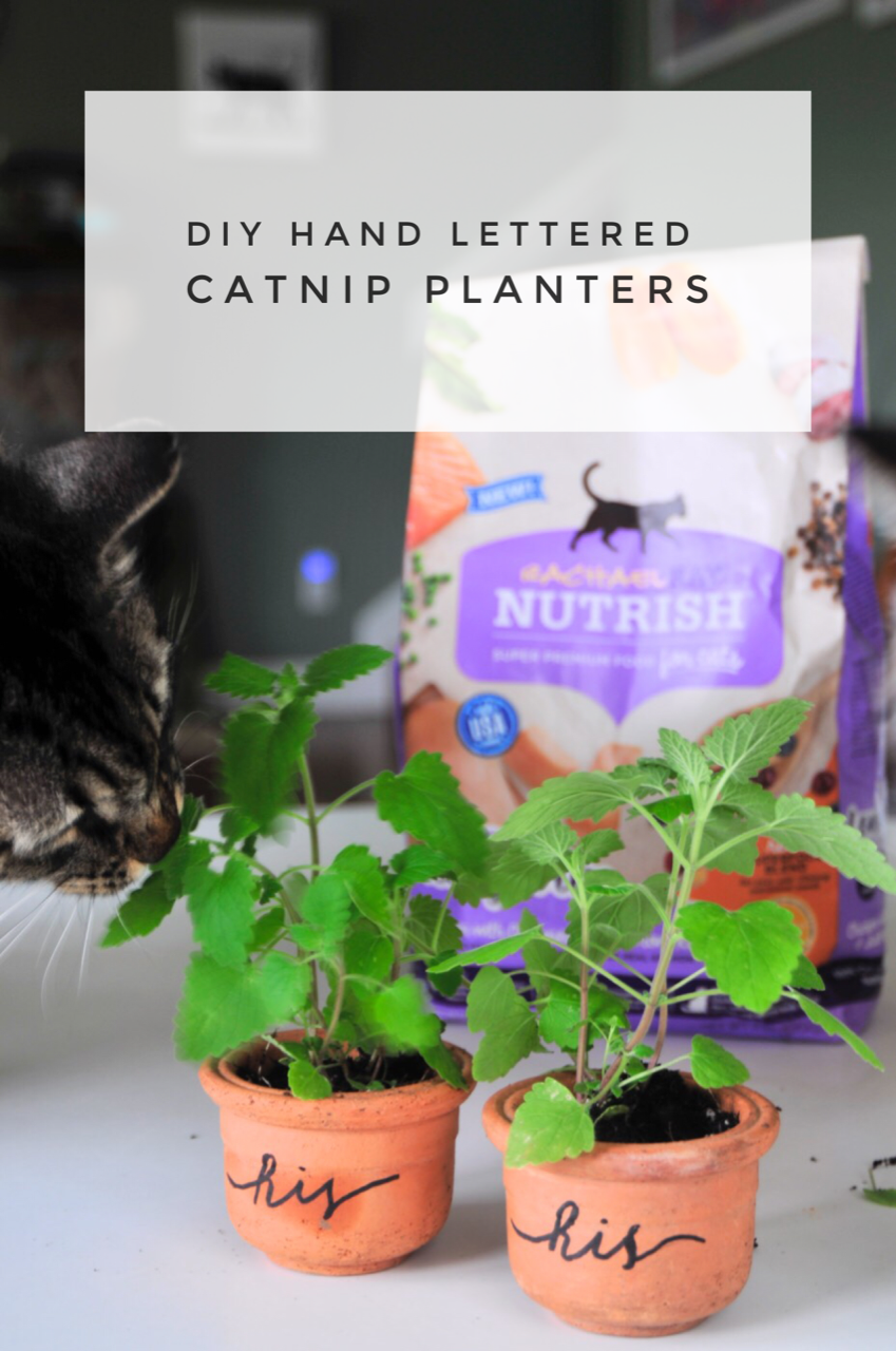 Hand Lettered His and Hers Catnip Planters with Rachael Ray