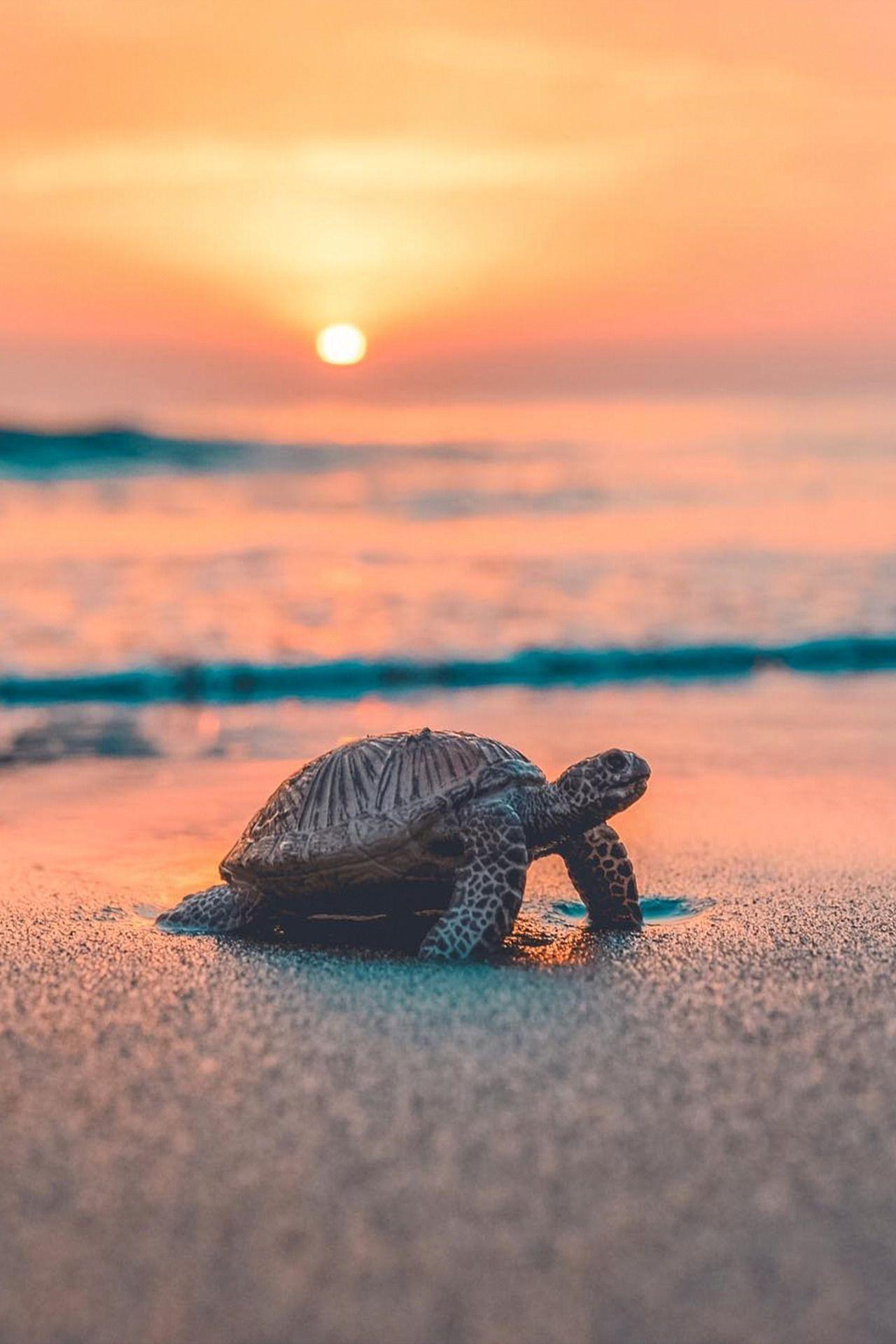 Desvre Baby sea turtles, Turtle, Cute turtles