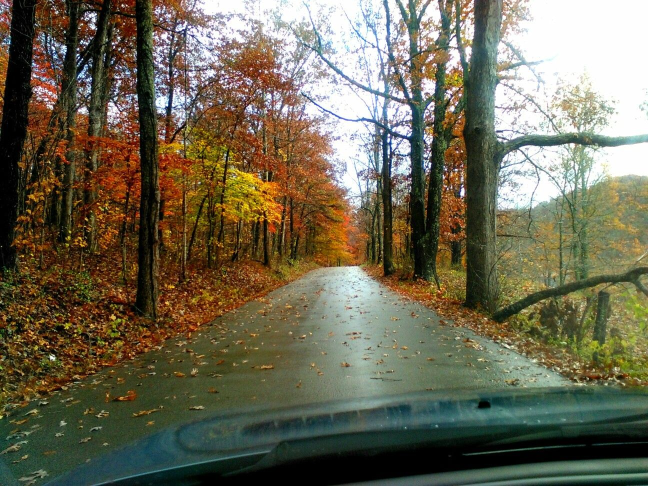 Autumn in ol Kentucky is so beautiful