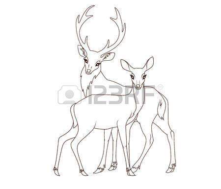Cerf Dessin Livre De Coloriage Couple De Daims Isole