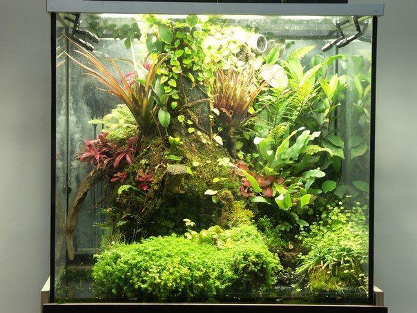 Jury Che Wabi Kusa Amp Terrarium Amp Paludarium Amp Riparium