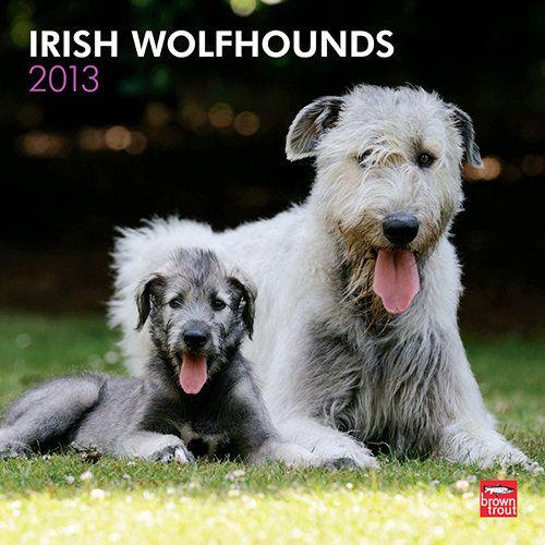 Pin by Cassie Talamantez on Little Cuties | Irish ...  Deerhounds